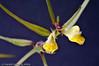 Viltvoksende blomst
