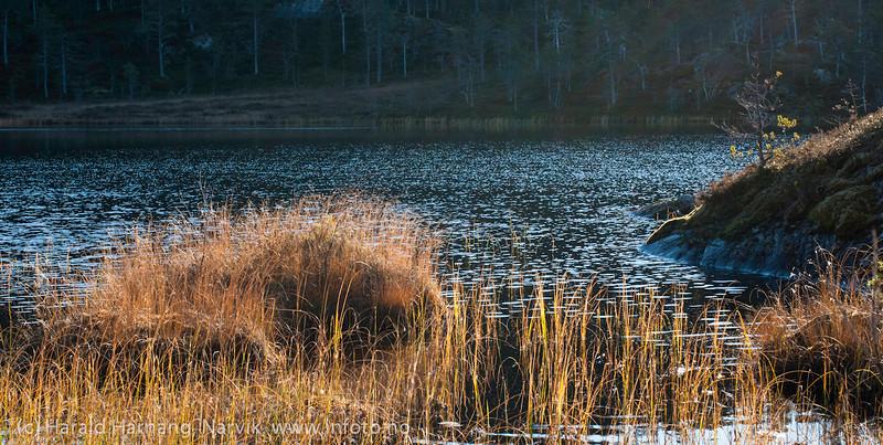 Makrofoto oktober 2012, Efjord.