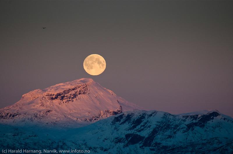 Måne over Leigas,