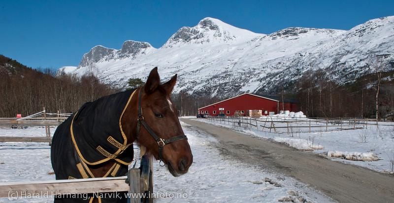 Narvik ridesenter, Skjomdalen, 3. april 2012.