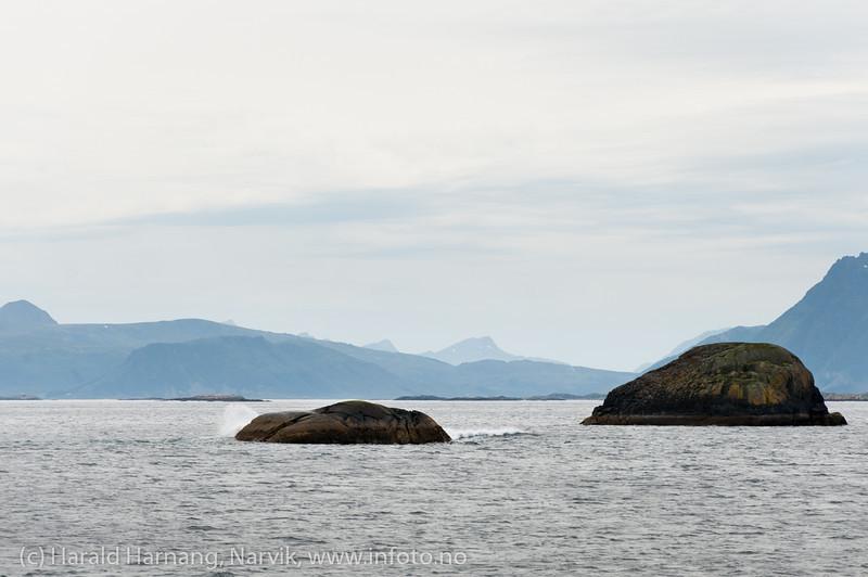 I nærheten av Henningsvær. Lofoten, juni 2013.