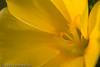 Blomster, abstrakt
