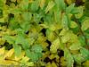Trær, grønt, blader,