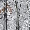 Zimowe abstrakcje - Piony