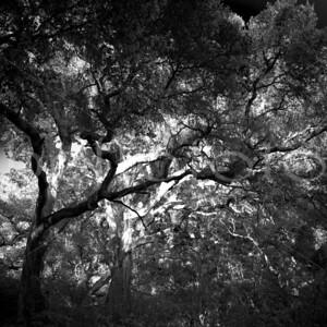 """Stand By Me"" - San Luis Obispo, California"