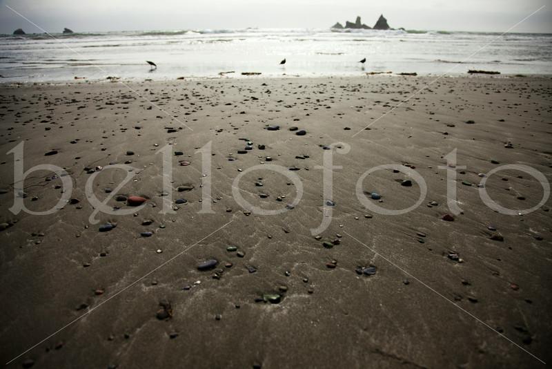 """""""Nature's Confetti"""" - Central Coast of California"""