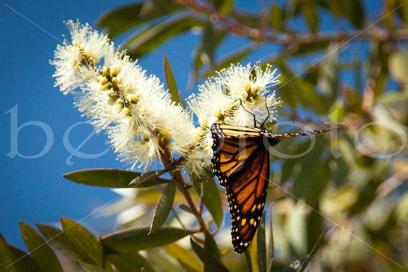 """Monarch Landing"" - Shell Beach, California"