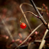 """Spring Harvest"" - Alaska"