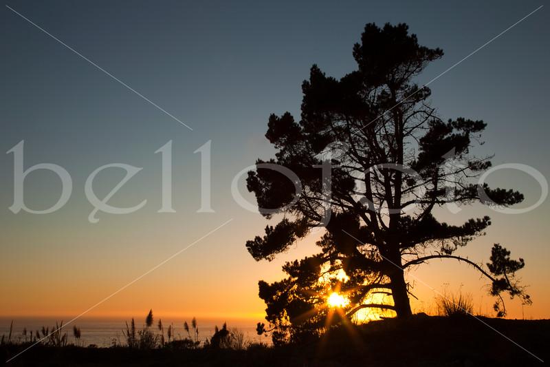 """""""Quiet Journey"""" - Big Sur, California Coast"""