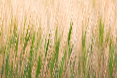 Tall Grass Prairie, Oak Hammock Marsh Manitoba
