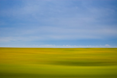 Canola Field in Motion, Manitoba