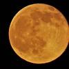 """Strawberry Moon"" June 20, 2016"