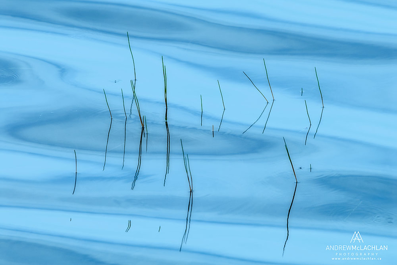 Reeds and Water, Horseshoe Lake, Parry Sound, Ontario