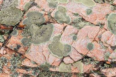 Lichens and pink granite on Georgian Bay, Parry Sound, Ontario, Canada