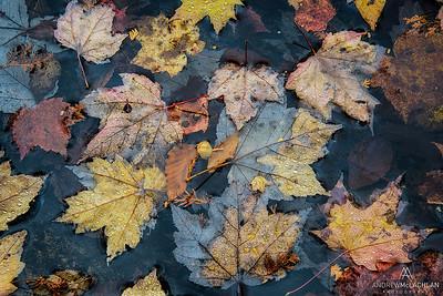 Autumn Details, Muskoka, Ontario