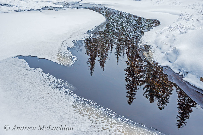 Algonquin Reflections in Winter