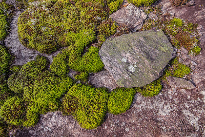 Granite details and moss in the Torrance Barrens, Muskoka, Ontario, Canada