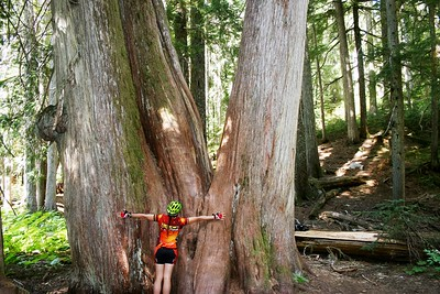 Giant Cedars, Cougar Mt., Whistler BC