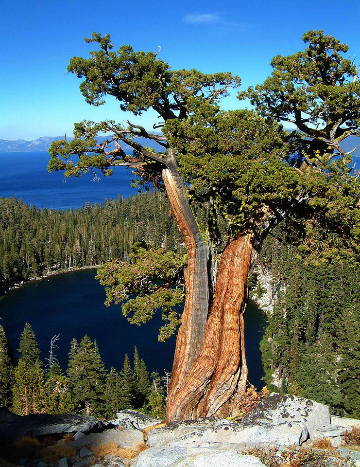 The Guardian - Lake Tahoe, CA