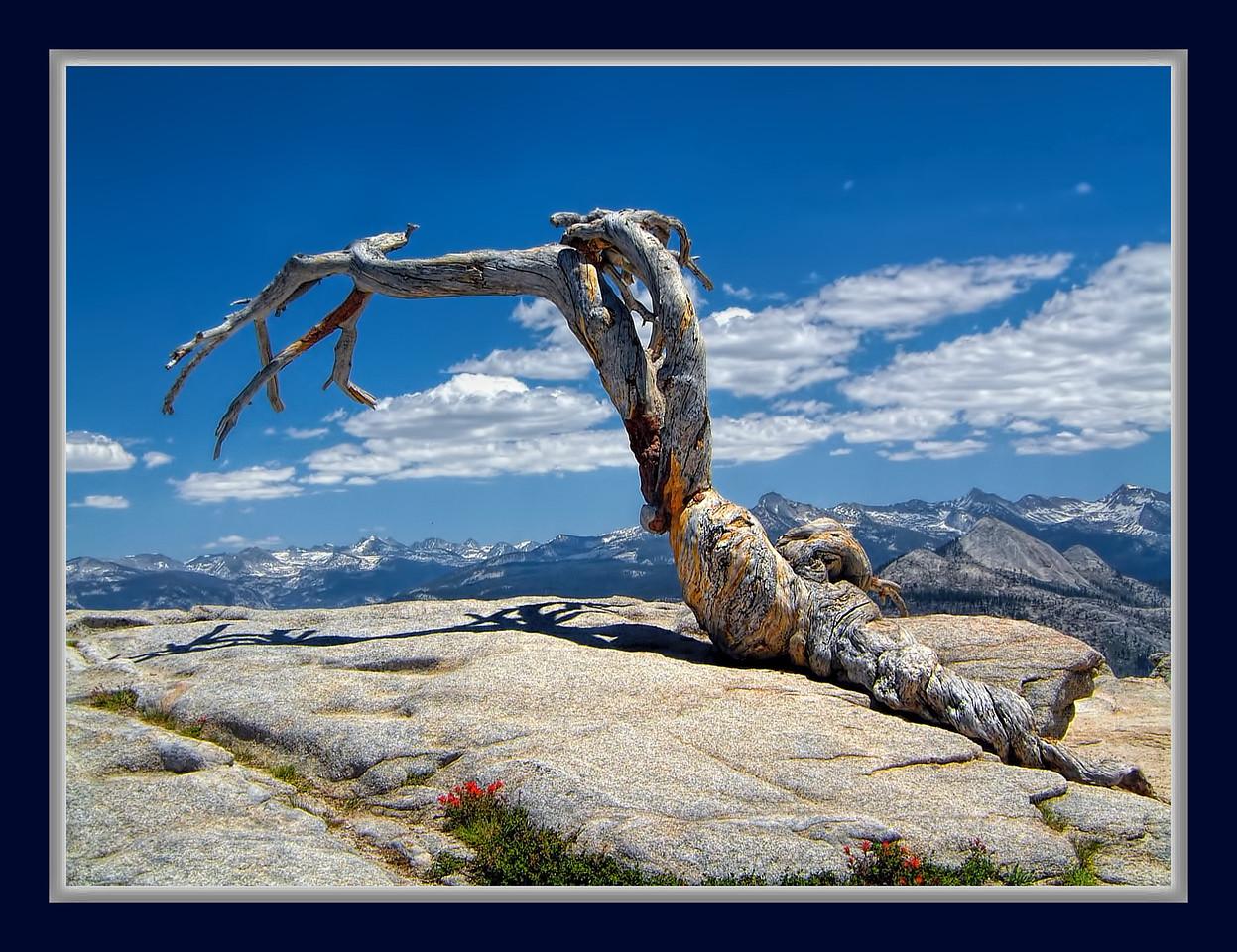 Final Days - Yosemite CA