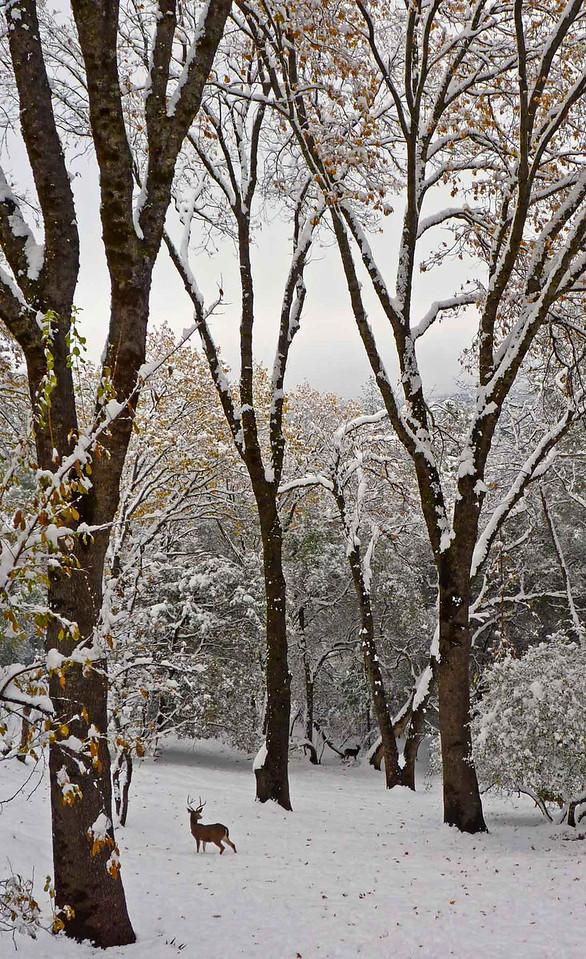 Winter Search - Grass Valley, CA