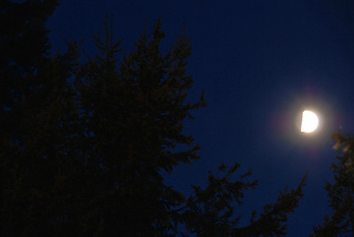 Blue Moon in Forest