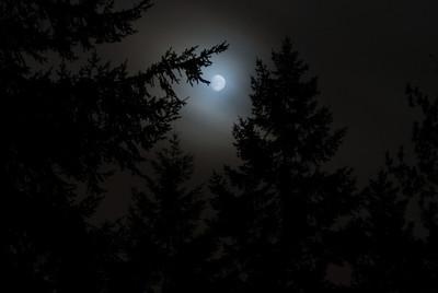 Full Moon on Forest Lane