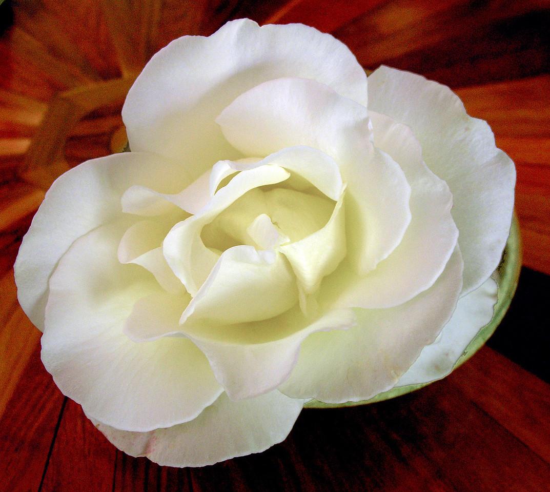 Rose in Wood Bowl