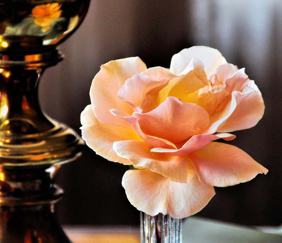Peace Rose on Desk