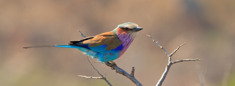 Southern African Birds