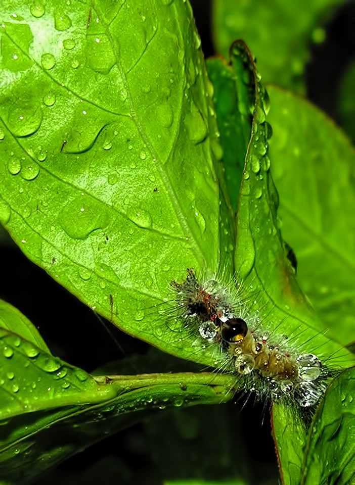 Caterpiller in Rain