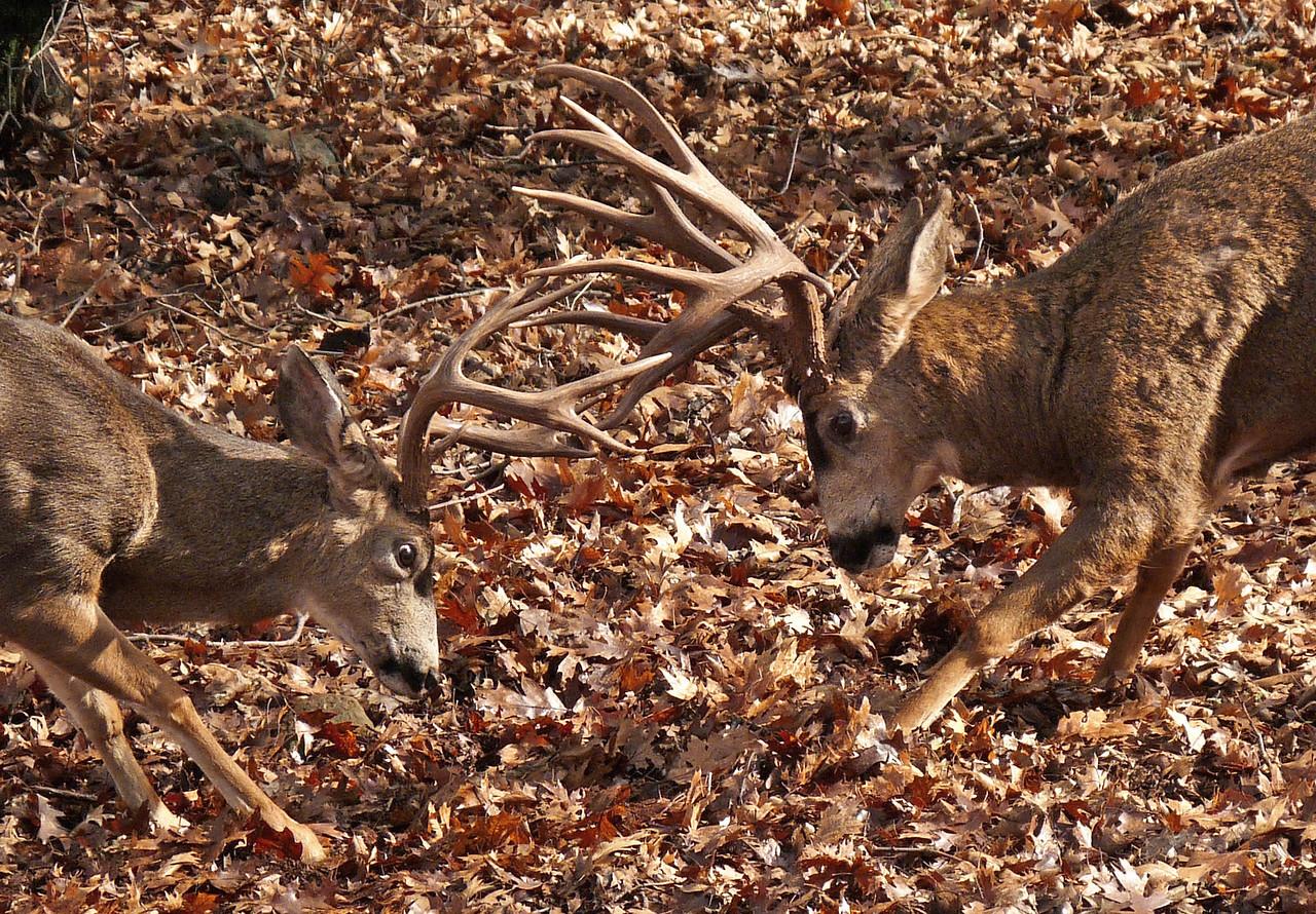 Battlin Backyard Bucks Series - #4