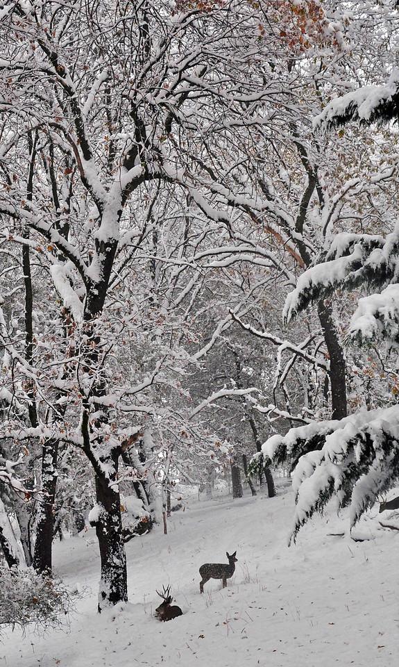 In the Quiet of Winter - Grass Valley, CA