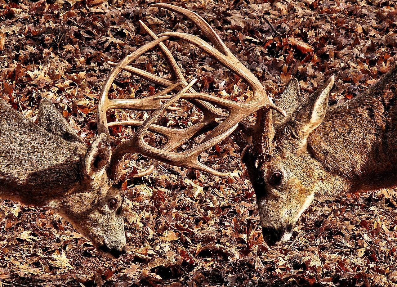 Battlin Backyard Bucks Series - #7