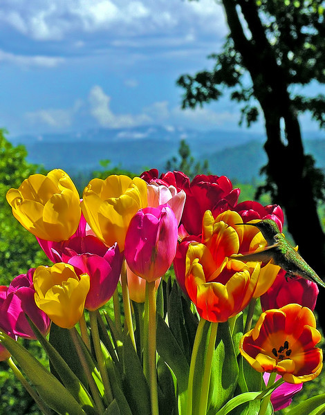 Anna  with Tulips and Mountain View
