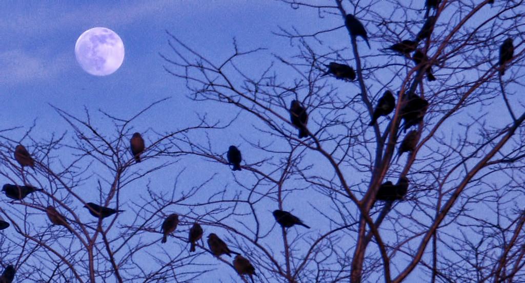 Meeting Beneath the Moon