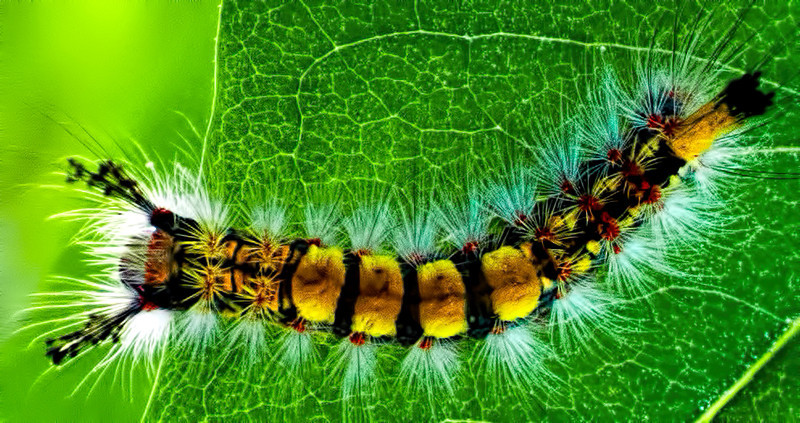 Caterpiller on Leaf