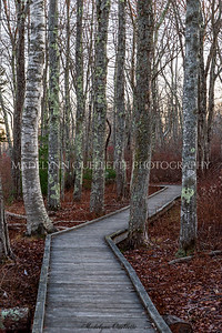 Boardwalk on Wells Reserve