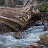 Downed tree in the rushing Merced river