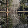 Yosemite National Park's forest reflected in the Ahwahnee meadows/pond