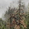 Yosemte National Park's forest amidst the clouds