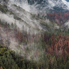 Cloud covered forest at the base of Yosemite National Park's El Capitan