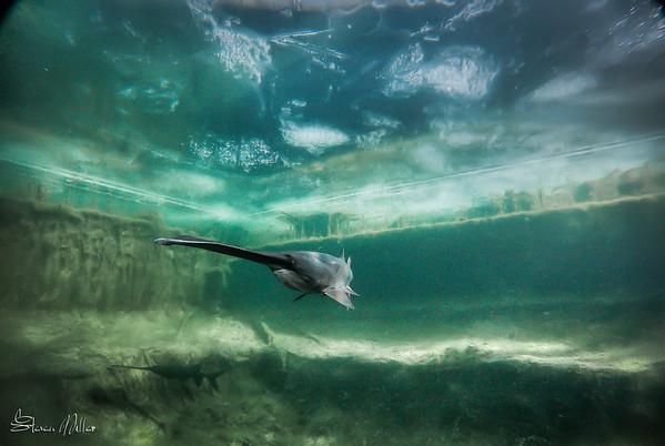 CNC Natural Pool- Underwater Photo Studio