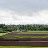UNiversity of Alaska Cooperative Extension<br /> Georgeson Botanical Garden<br /> Fairbanks Experiment Farm