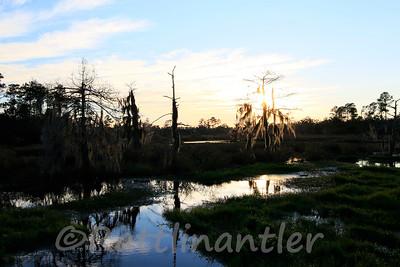 Big Branch Marsh Bayou