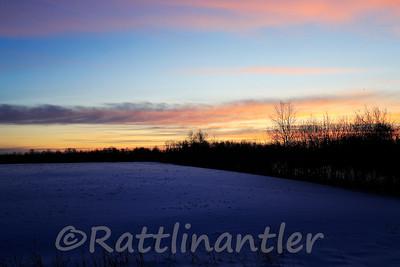 Bog Sunrise