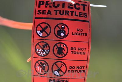 Sea Turtle Nesting Area