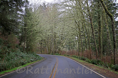 Oregon Rainforest