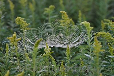 SpiderWeb83108_002