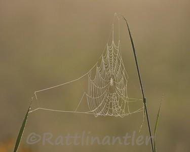 SpiderWeb80308_001